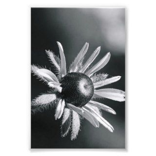 Alphabet Letter Photography O8 Black and White 4x6