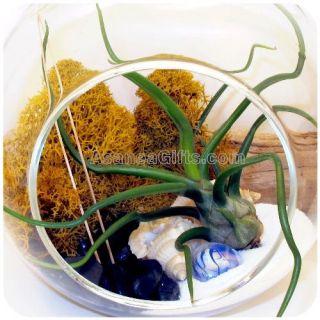 Yin Yang Air Plant Terrarium Hanging Glass ORB Zen Garden Kit Housewarming Gift