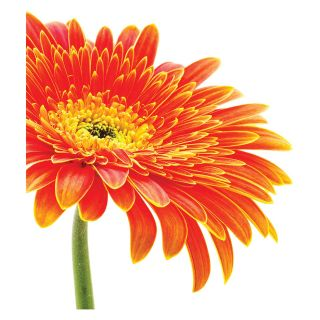 Daisy Photographic Panels Wall Art Kit   Wall Decals