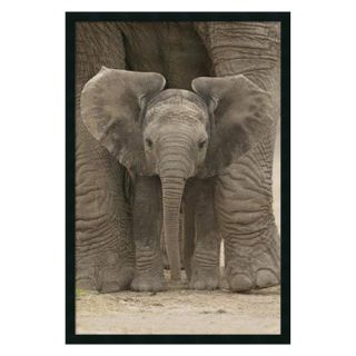 Big Ears   Baby Elephant Framed Wall Art   25.41W x 37.41H in.   Photography