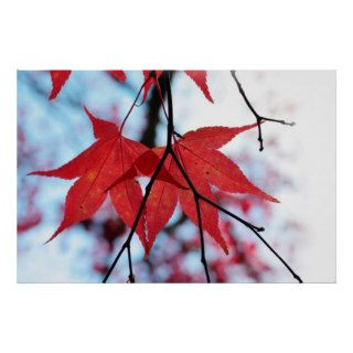 Japanese maple leaves posters